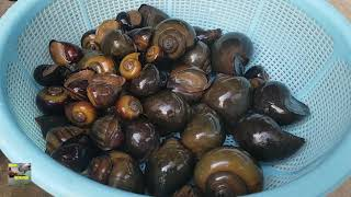 Asian countryside food - Let's eating grilled snails so delicious