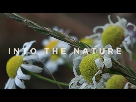 Canon 250d (SL3) - A Cinematic Video Test | Into The Nature