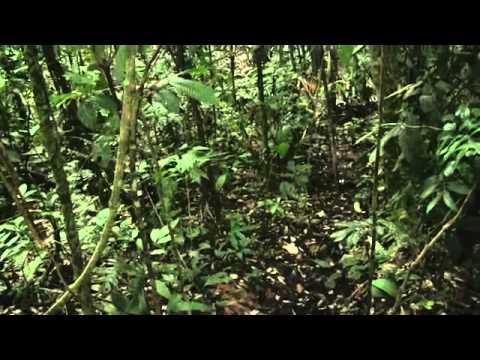 Chevron Toxic Waste Pit in Ecuador: Designed to Pollute
