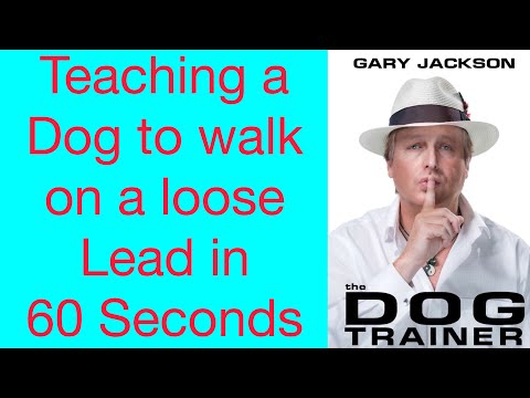 Teaching dog to walk on lead in 60 seconds