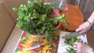 274. Видео урок. Как заготовить зелень петрушки и укропа.