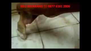 Jual Pembersih Keramik Magic Clean | Contact : 0877 6161 2806