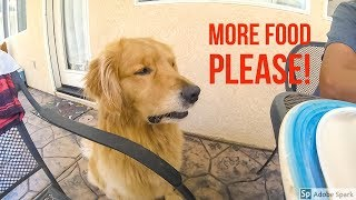 SPOILED OSHIE ARGUES FOR FOOD | Oshies World