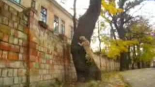 TreT - PARKOUR DOG FROM UKRAINE (TreT-Style)
