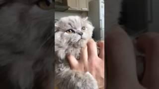 Как лечить кота