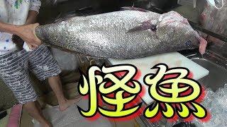 【ノーカット】推定年齢400歳?深海の怪魚をさばいてみた! thumbnail