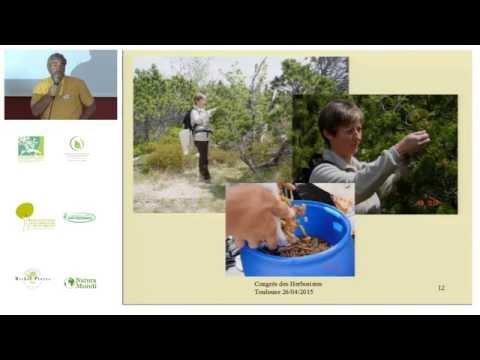 La gemmothérapie scientifique : une phytothérapie du futur - Congrès des Herboristes 2015