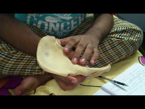 hip bone   ilium