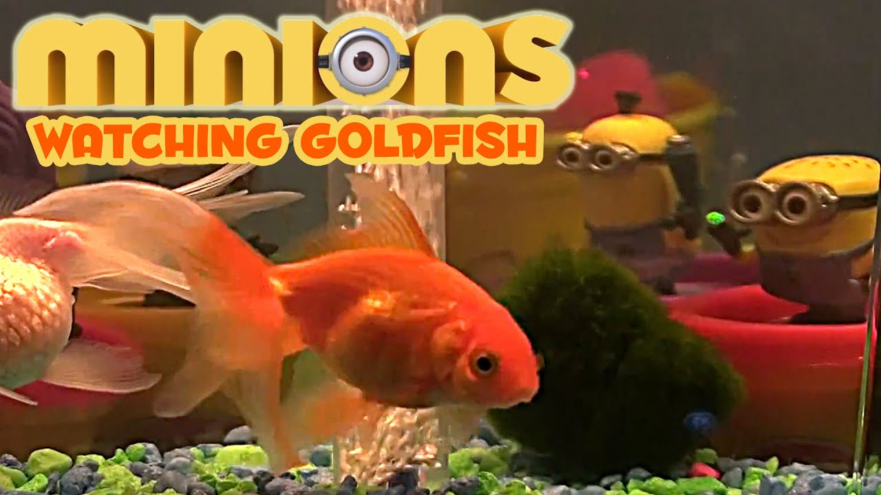 Bedtime Lullaby Songs Minions watching goldfish 30 Minutes sleep