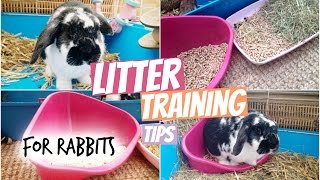 Litter Training Tips For Rabbits | RosieBunneh