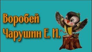 Воробей Чарушин Е. И.