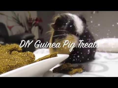 ♡ DIY Guinea Pig Treats ♡