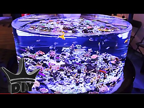 Saltwater aquarium fish show - MACNA 2014