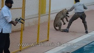 Latest Leopard attack video from India: this one from Bangalore!
