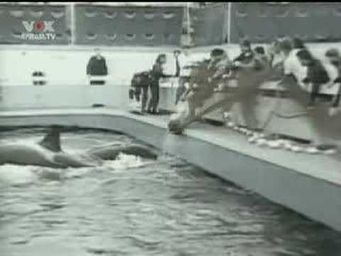 SeaWorld orca Tilikum that killed trainer dies  BBC News