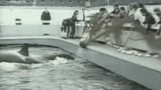 Attack Orcas: Sealand of Pacific and Seaworld california