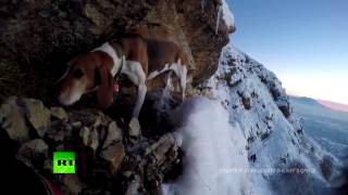 RAW  Rescue op as dog stuck on steep cliff