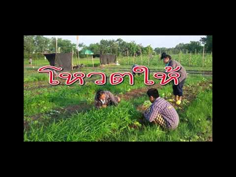 เด็กไทยหัวใจเกษตร