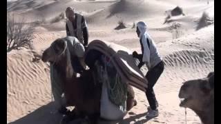 Caravan in Sahara