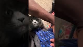 Pussy waptrick hairy Black porn