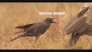 BEST OF LEMME SMASH VIDEOS (COMPILATION #8) (GRAFFITI AND MAJIK EDITION)