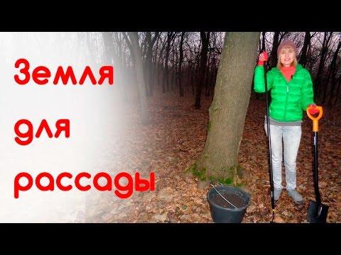 Вопрос: Какой состав грунта для посадки бобовника?
