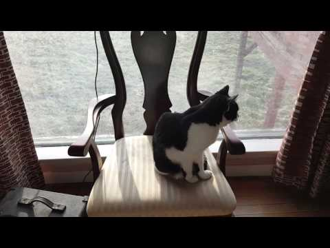 Maddie The Singing Cat Sings Home On The Range