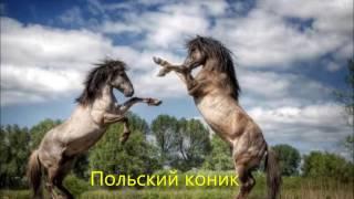 Все породы лошадей.  Более 210 пород лошадей. Красивые лошади
