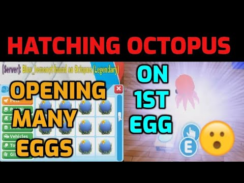 Download OPENING OCEAN EGGS & HATCHING THE LEGENDARY OCTOPUS ON THE 1ST EGG - ADOPT ME OCEAN EGG UPDATE
