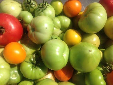 Как дозреть помидоры дома