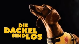 Die Dackel sind los (ganzer Film für Kinder kostenlos, ganzer Hundefilm, Kinderfilme deutsch online)