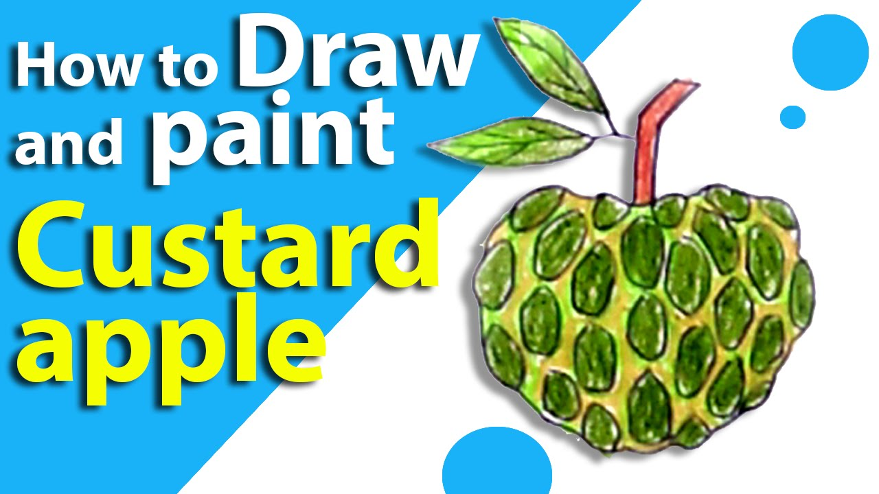 Learn How To Draw A CUSTARD APPLE
