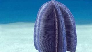 Развитие жизни на Земле (The Evolution of Life) - Свартпунтия (Swartpuntia germsi)
