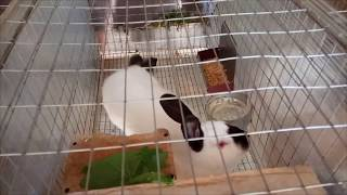 кролики и антибиотики
