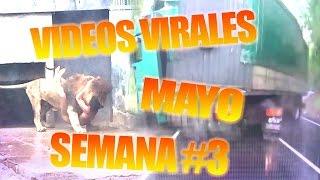 Recopilación de Vídeos Virales Mayo Semana #3 || VÍDEO VIRAL 2016