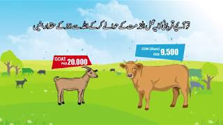 Alkhidmat Foundation Pakistan Qurbani Project 2018