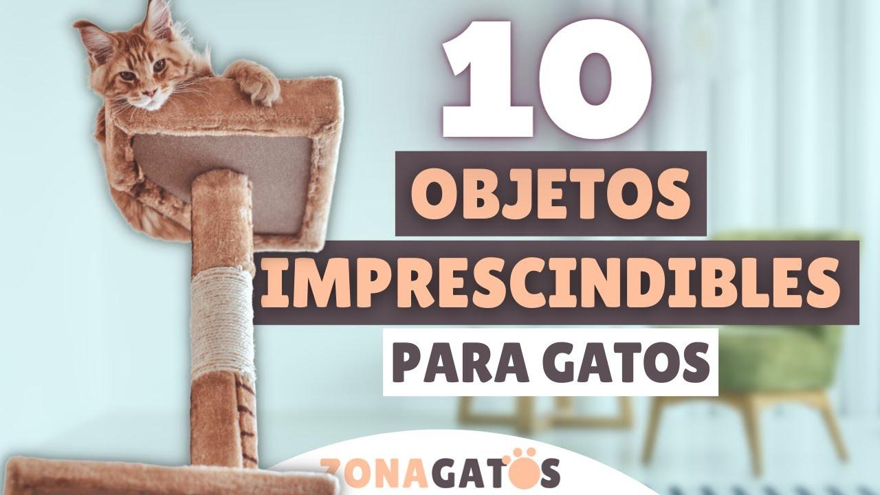Qué NECESITA un gato: 10 objetos IMPRESCINDIBLES ✔️