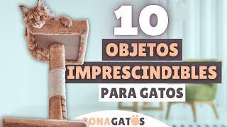 Qué NECESITA un gato: 10 objetos IMPRESCINDIBLES ✔
