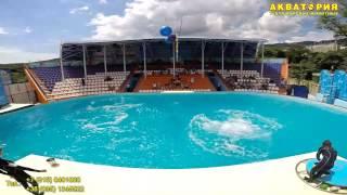 """Театр морских животных """"Акватория"""" (Ялта): игры дельфинов"""