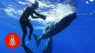 Deciphering the Secret Language of Whales