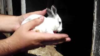 Как выглядят маленькие кролики (в возрасте 2 дней, а потом 2 недель)(Просто снял как выглядят 2-х дневные и потом уже 2-х недельные крольчата, которые привела крольчиха по имени..., 2014-08-04T11:36:09.000Z)