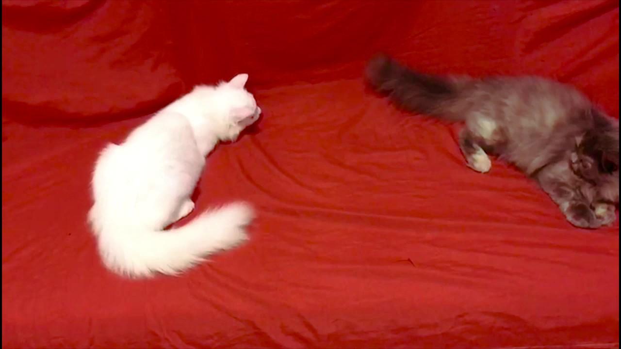 Kittens Like to play Hide & Seek