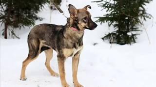Собака ищет дом. Очаровательная собака Ненси ищет дом и любящего хозяина
