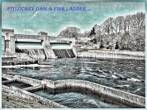 Pitlochry Dam & Fish Ladder (with Salmon)