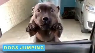 Dogs Jumping  Funny Videos of Jumping Doggos