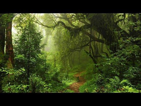 Вопрос: Хвойные или широколиственные леса выделяют больше кислорода Почему?