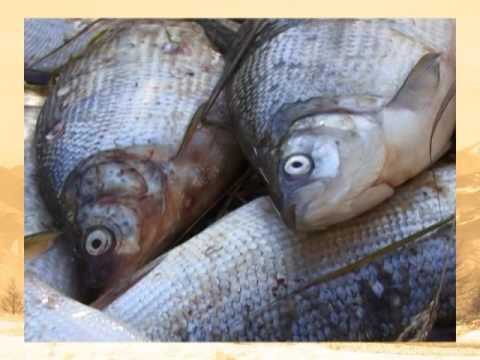 Промысловая рыбалка в