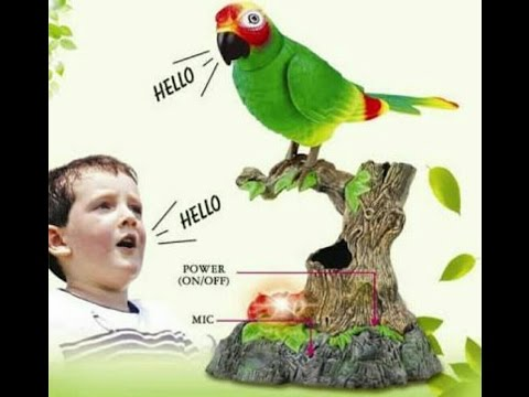 How to talk a parrot as a human