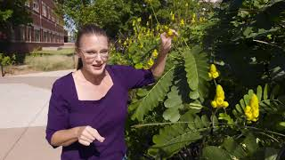 Some Beautiful Plants and Great Tips for any Garden on the Best of Oklahoma Gardening (#4729)