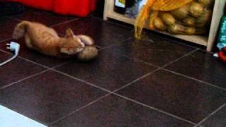 Ginger Attacking Large Potato Pt1